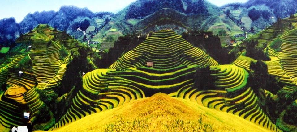 mu-cang-chai-terraced-field
